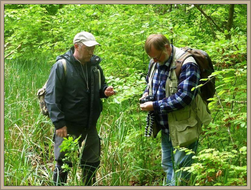Und dann eine handfeste Überraschung. Zwei alte Bekannte vom Rehnaer Pilzverein waren auch hier unterwegs um an einen kleinen Waldtümpel zu umrunden und aus mykologischer Sicht abzukartieren. Jetzt wurde es richtig interessant!