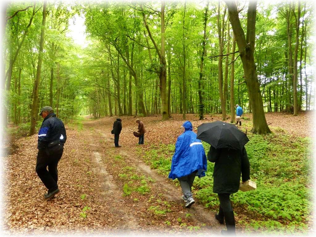 Dann ging es aber los. Zunächst bei einsetzendem Regen durch einen Buchenwald.