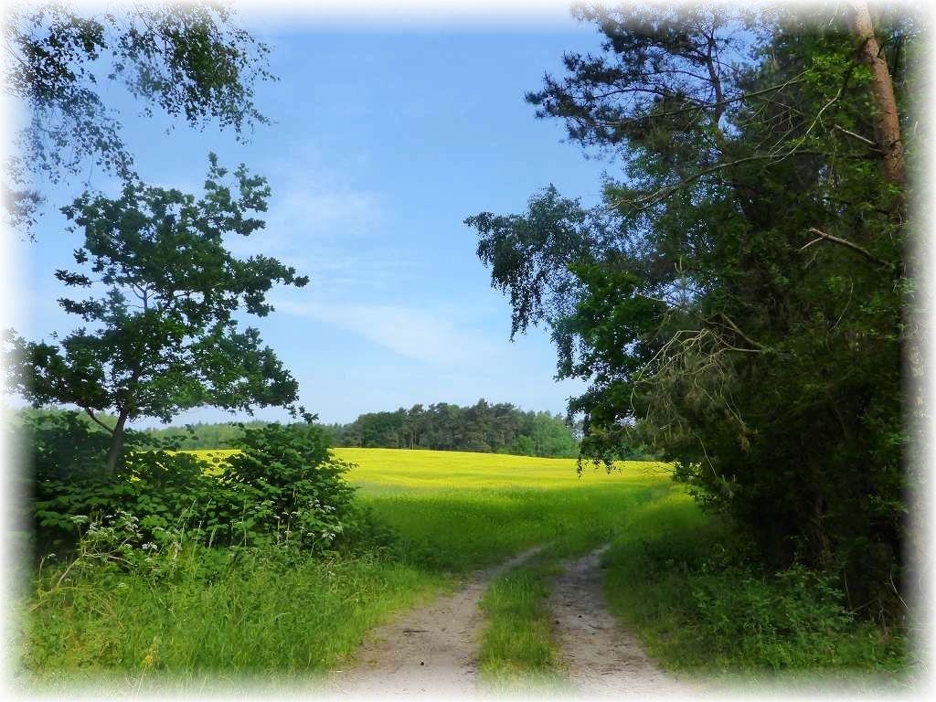 Durch sandige Nadelmischwälder und vorbei an blühenden Feldern, bei sommerlicher Schwüle führte unsere heutige Wanderung bei Biendorf.