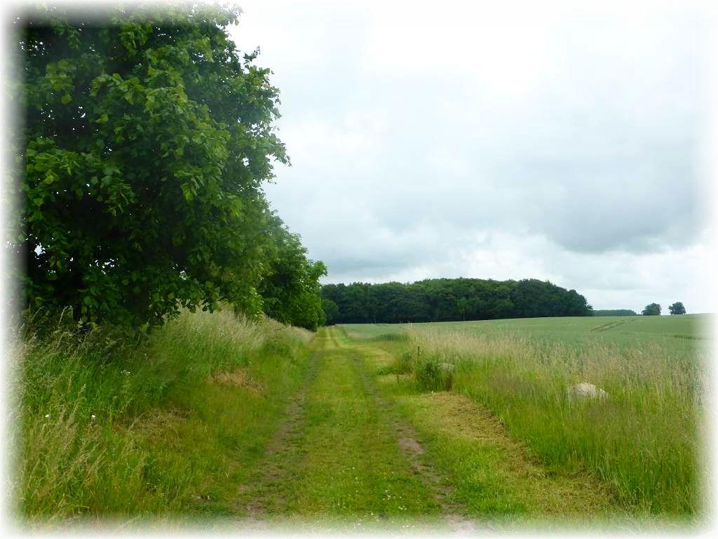 Dann ging es aber auf diesem grasigen Feldweg direkt in Richtung Wald.