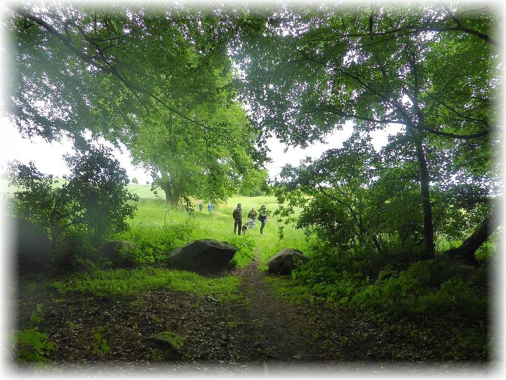 Der Wald ist gleich erreicht. Wie ein dunkles, geheimnisvolles Gewölbe überdachen die Baumkronen der alten, mächtigen Buchen den Eingang zum Wald.n