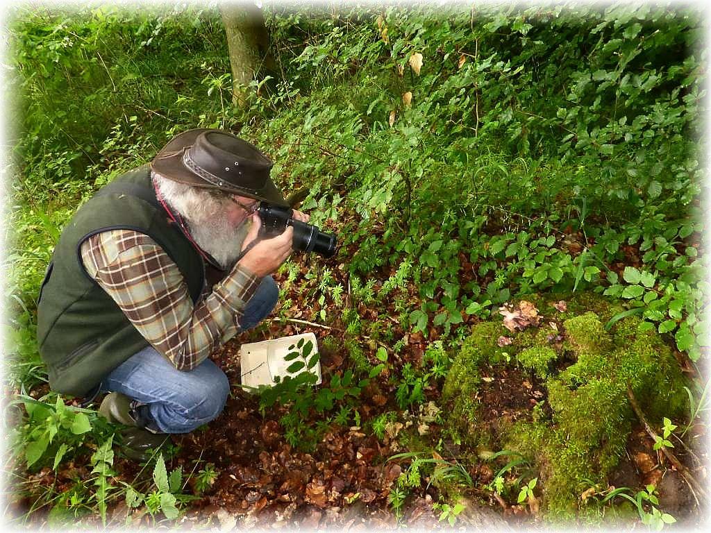 Auch Pilzfreund Wolfgang aus Düsseldorf läßt es sich nicht nehmen, diese schönen Pilze im Bild festzuhalten.