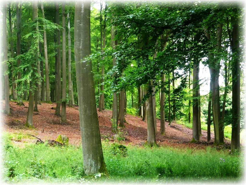 Immer wieder schöne, vielversprechende Stellen in diesem hügeligen Waldgebiet. Hier standen dann auch die einzigen Täublinge der heutigen Bestandsaufnahme.