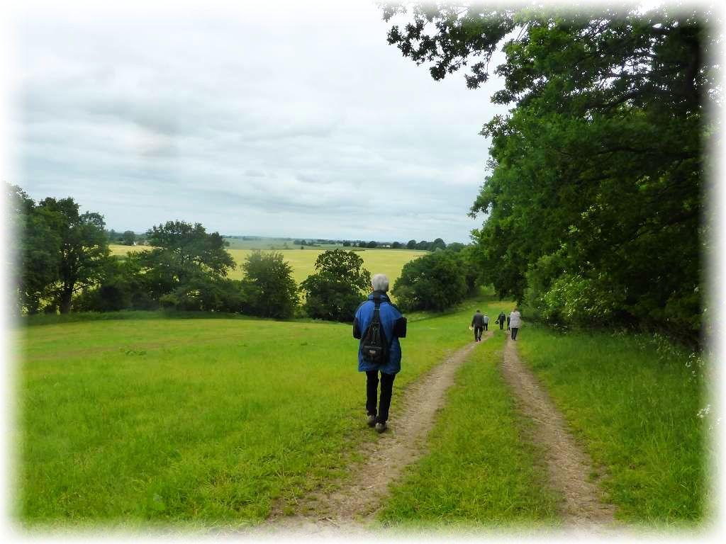 Nun geht es am Waldrand entlang in reizvoller, abwechslungsreicher Landschaft.