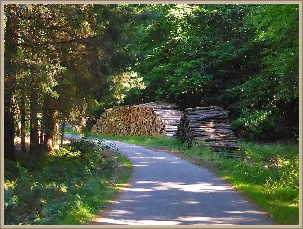 Leider wird auch in diesem schönen Forst im größeren Stil Holzeinschlag betrieben, was zahllose Stapel entlang des Waldweges belegen.