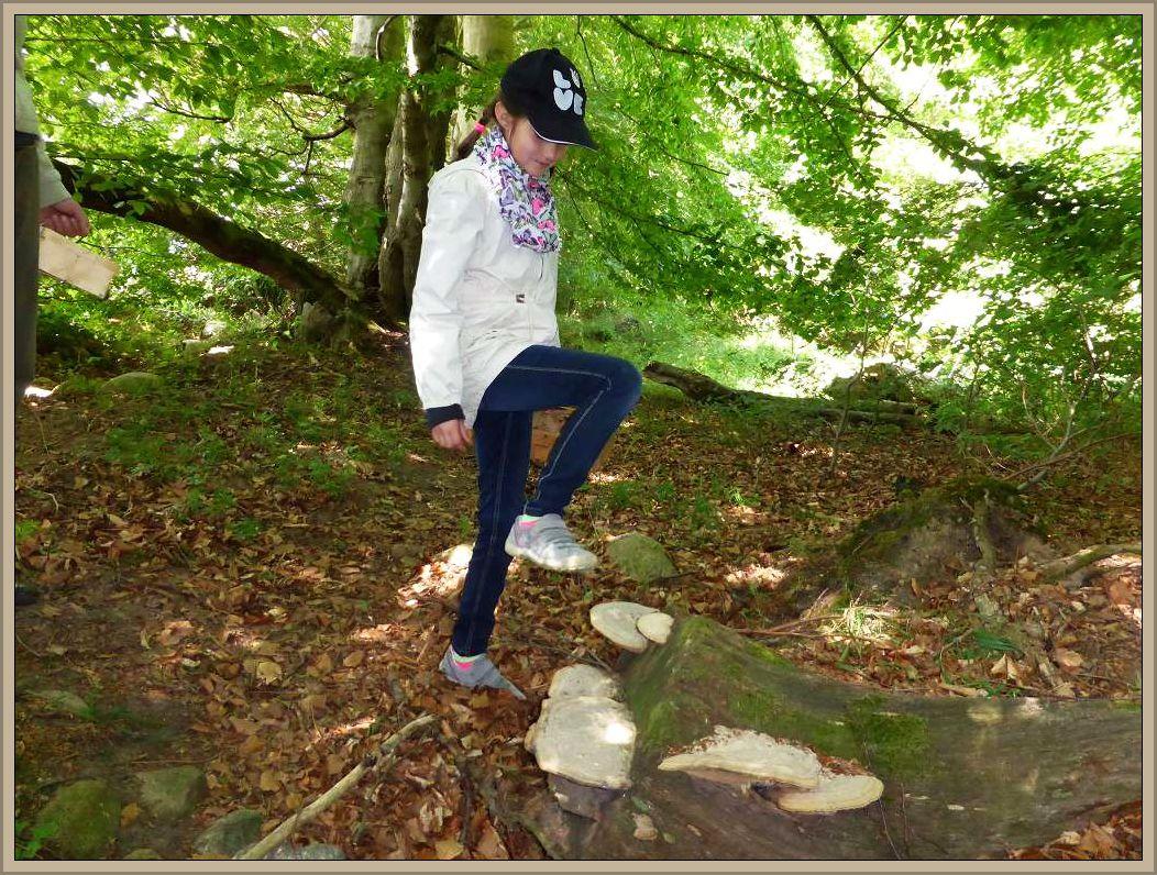 Ob dem Mädchen wohl gelingt, diese äußerst zähen und mit dem Holz verwachsenen Konsolen des Eichenwirrlings mit einem Fußtritt abzubekommen? Es gelang leider nicht.