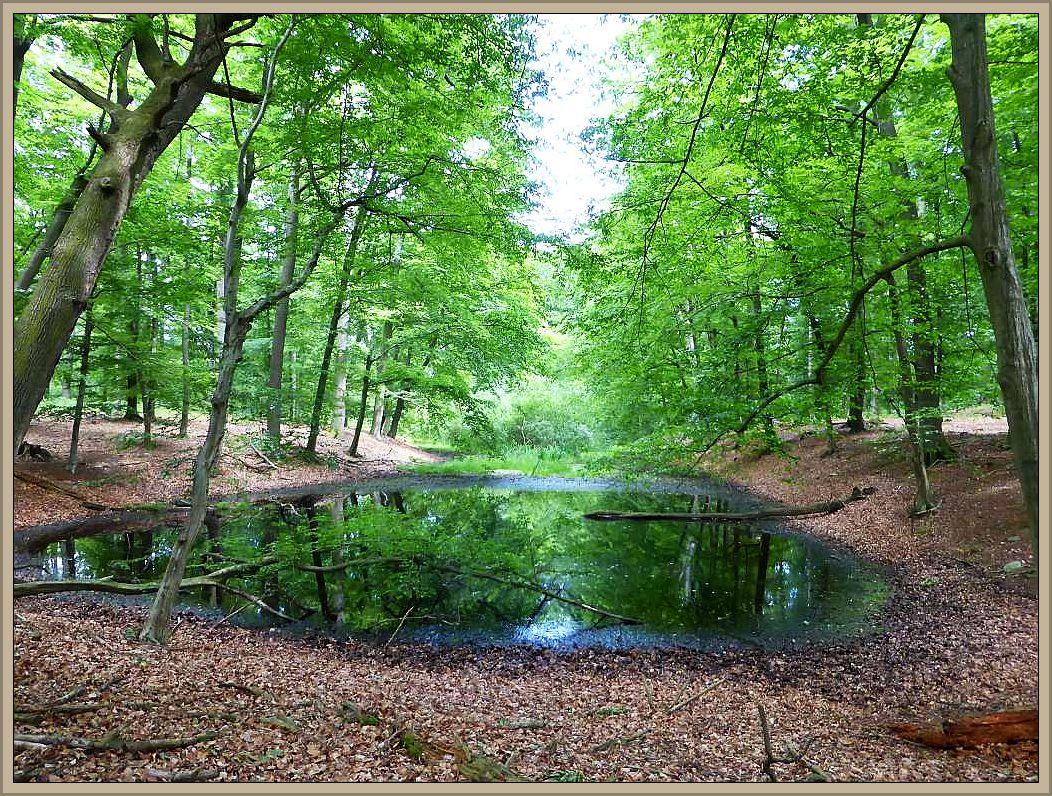 Ein herrliches Waldgebiet was jedem Pilzfreund, ob Kochtopfmykologe oder Fortgeschrittener Pilzkundler das Herz höher schlagen läßt.