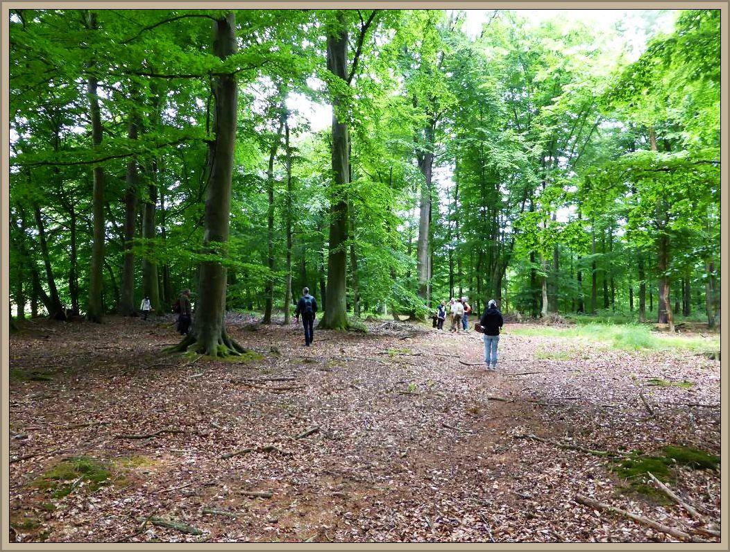Ist das nicht ein Trauerspiel, einen so herrlichen Pilzwald fast ganz ohne unsere heißersähnten Lieblinge zu durchwandern. Es kann eigentlich nur besser werden!