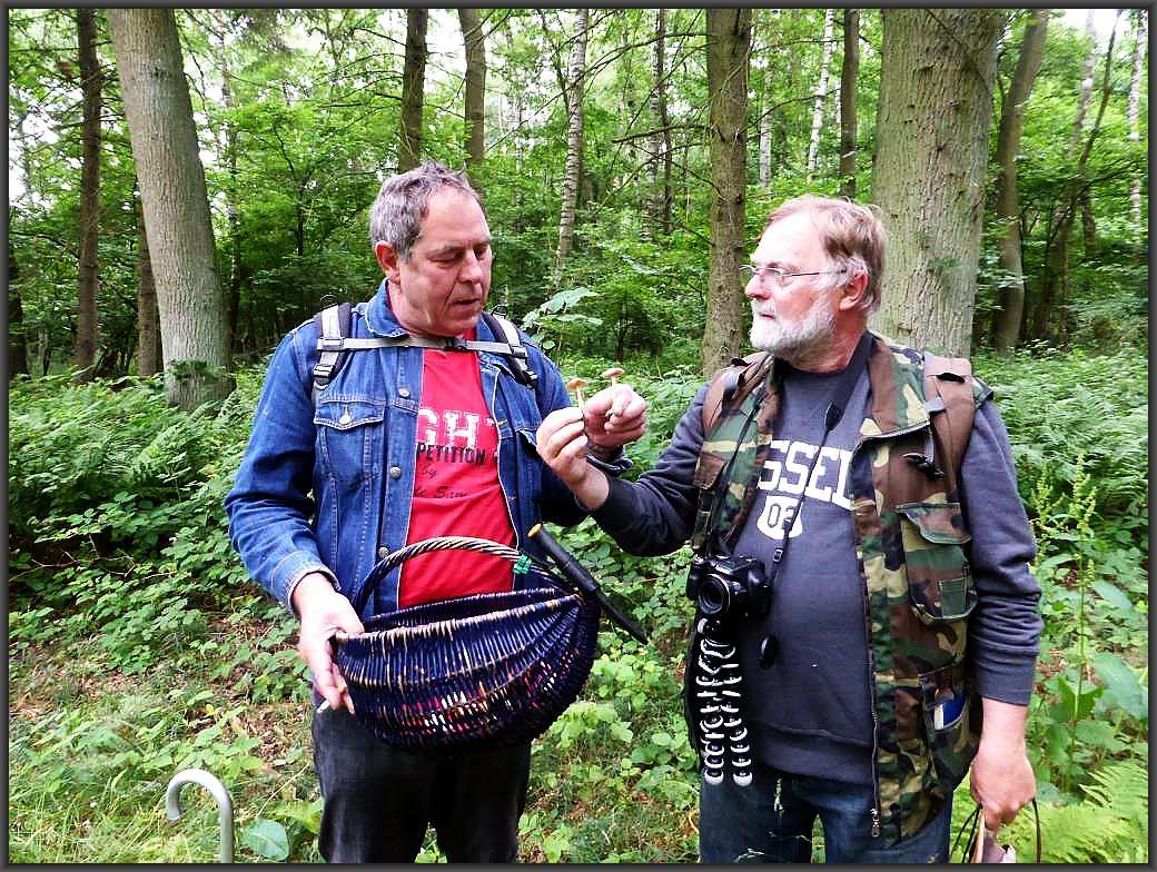 Peter und Christopher vergleichen zwei habituell ähnliche, aber dennoch verschiedene Blätterpilze. Einen Nelkenschwindling und einen Rissigen Ackerling, die sich häufig ihren Lebensraum teilen.