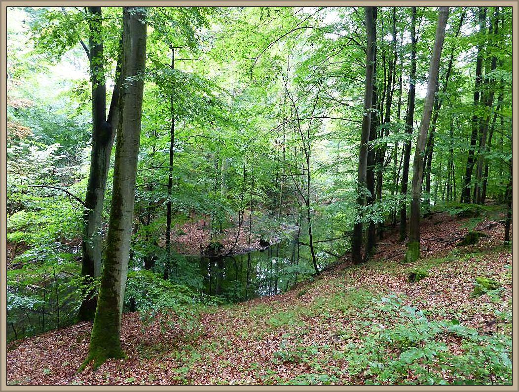 Das Radebachtal bei Blankenberg. Es führt ein naturnaher Wanderweg durch dieses wildromantische Gebiet. Auf Schautafeln längst des Weges ist viel über dieses interessante Gebiet zu erfahren.