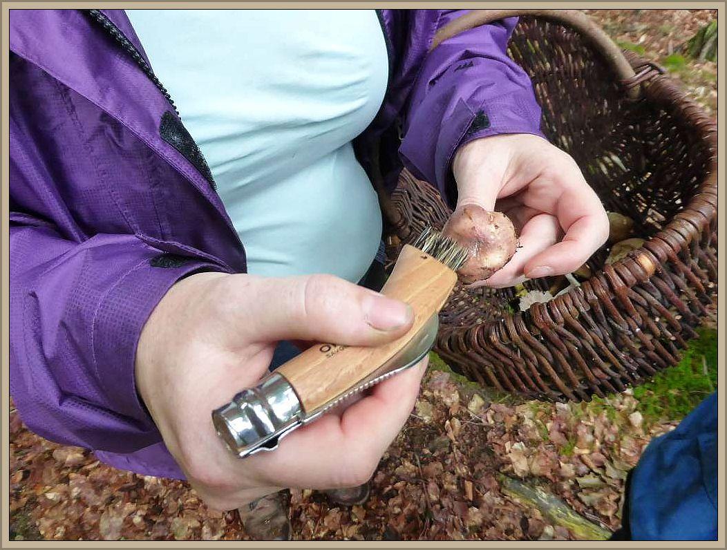 Bevor es aber ans Verspeisen geht, noch schnell mit dem Pinsel des Pilzmessers säubern.