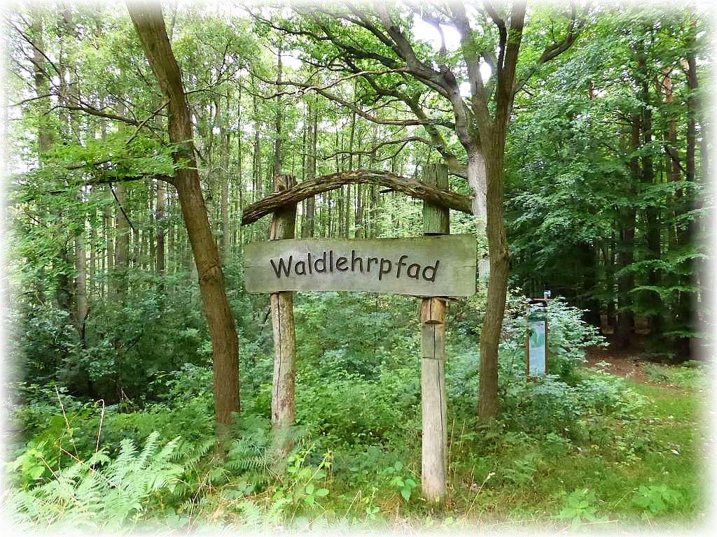 Von Schlowe aus kann hier auch ein Waldlehrpfad abgewandert werden.
