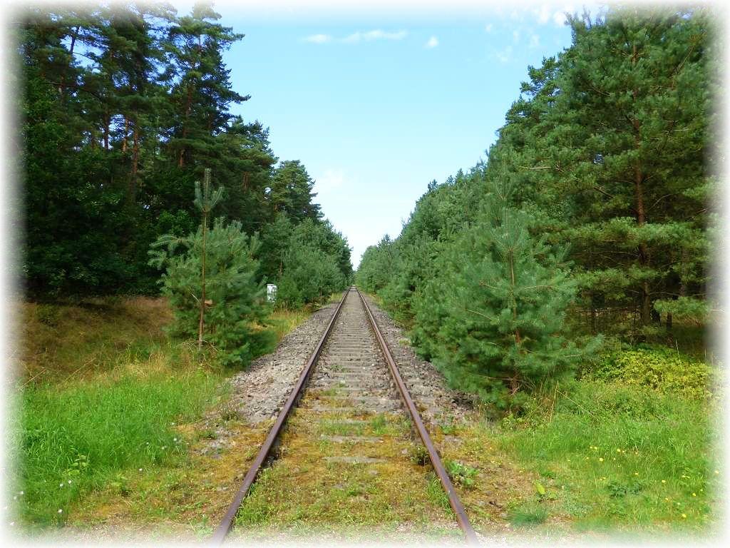 Durch dieses umfangreiche Laub- und Nadelwaldrevier führen noch die Gleise der ehemaligen Bahnverbindung zwischen Wismar und Karow. Von dort aus kann man nun mit einer Draisine bis nach Borkow fahren und die wunderbare mecklenburgische Landschaft genießen und mit etwas Glück sogar eine Pilzmahlzeit einsammeln.