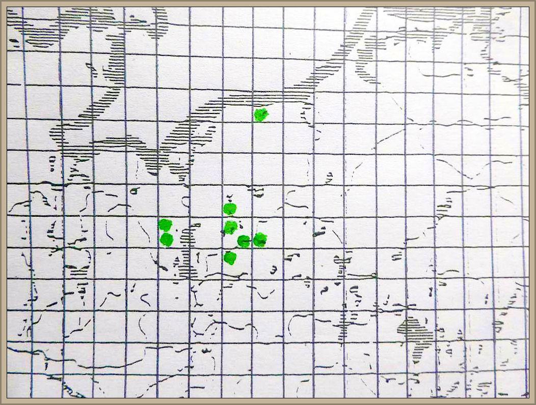 Cantharellus pallens Pilat - Blasser Laubwaldpfifferling
