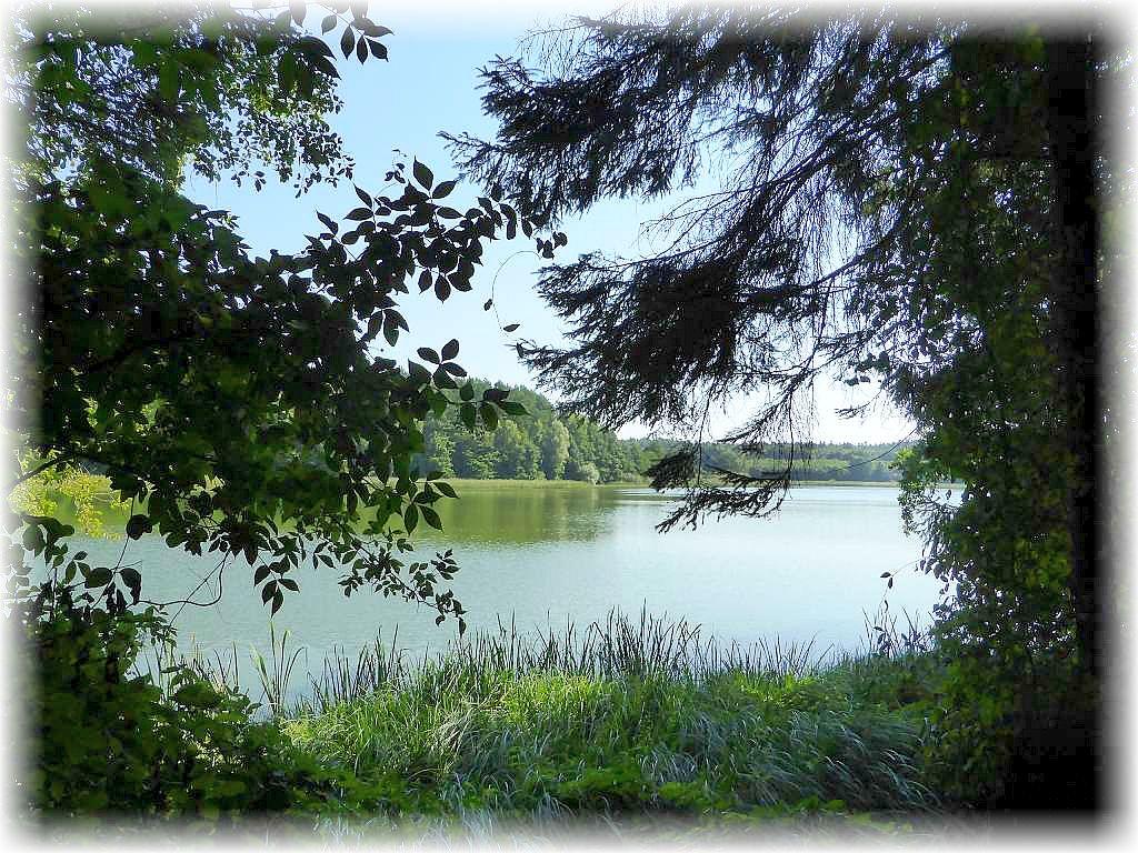 Blick vom Wald aus auf den Lähnwitzer See am 22. August 2015.