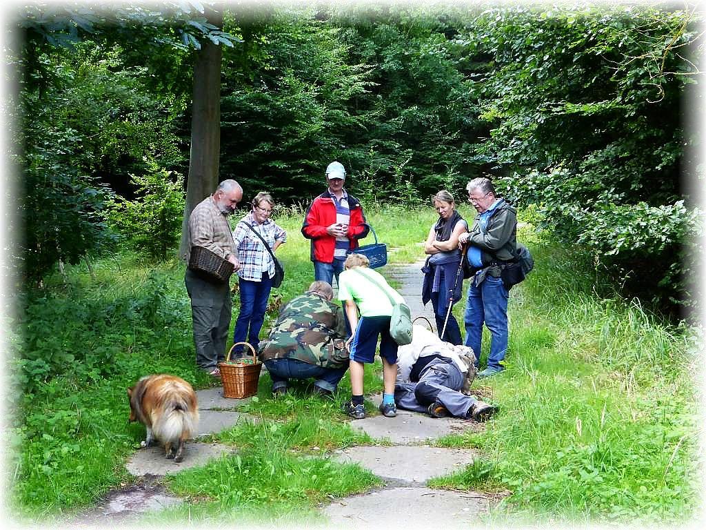 Der Waldweg war aufgrund dieses Fundes für mindestens 10 Minuten blockiert für eine mykologische Felduntersuchung.