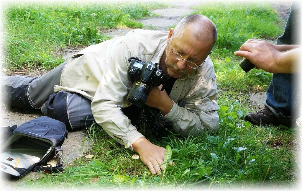 Hier sehen wir ihn in Aktion um zwei verschiedene Düngerlingsarten, die hier auf altem Pferdemist wuchsen, zu fotografieren. Torsten Richter ist im Berufsleben Biologie - Lehrer in Rehna und des weiteren auch der Vorsitzende des dortigen Pilzvereins Heinrich Sternberg. Foto: Ulrich Klein.