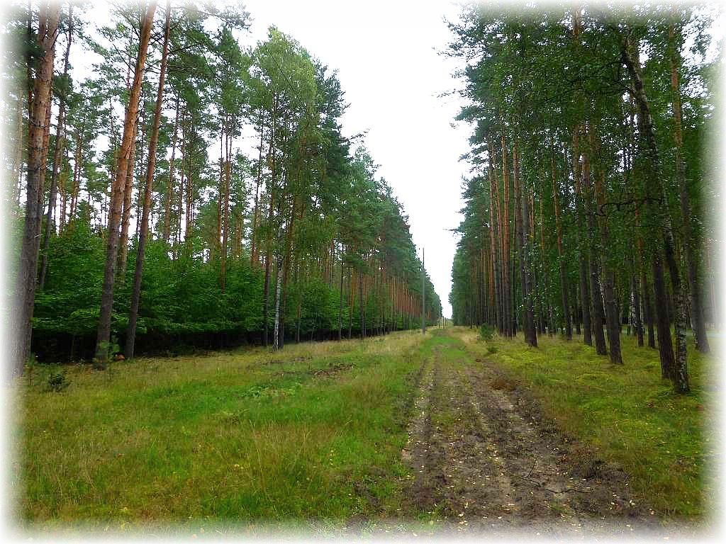 Die Lüschower Tannen waren heute Ziel einer geführten Pilzwanderung. Pilzsuchergebiet vom feinsten!