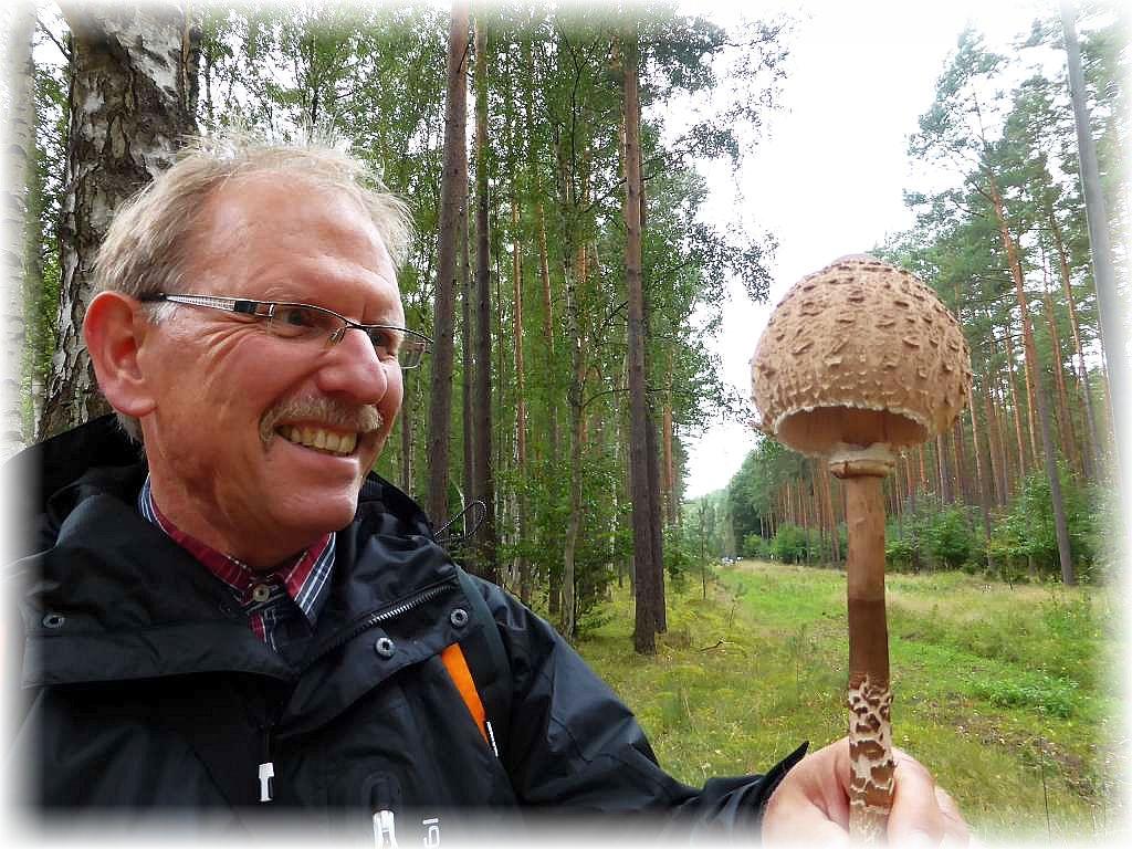 Große Freude auch über diesen stattlichen Riesenschirmpilz (Macrolepiota procera). Er wurde heute mehrfach gefunden und wird so manches Pilzgericht bereichern.
