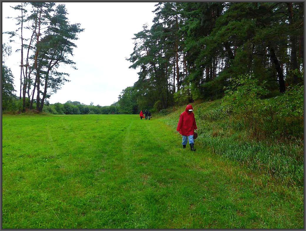 Weiter ging es immer entlang des Waldrandes und es regnete und regnete!