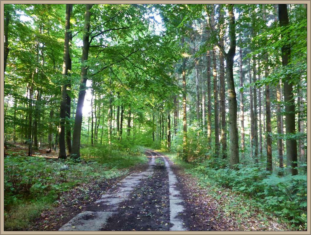 Sogleich ging es los durch dieses vielseitige Waldgebiet. Buchen- und Eichenwälder wechseln mit Fichten und Lärchenbereichen.