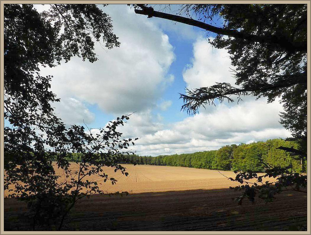 Wiesen, Felder und Wälder kennzeichnen die Landschaft der Gemeinde Gudow in Schleswig - Holstein an der Grenze zu Mecklenburg - Vorpommern und der Schaalseeregion. Sie war heute Ziel einer Individuellen Pilzwanderung.