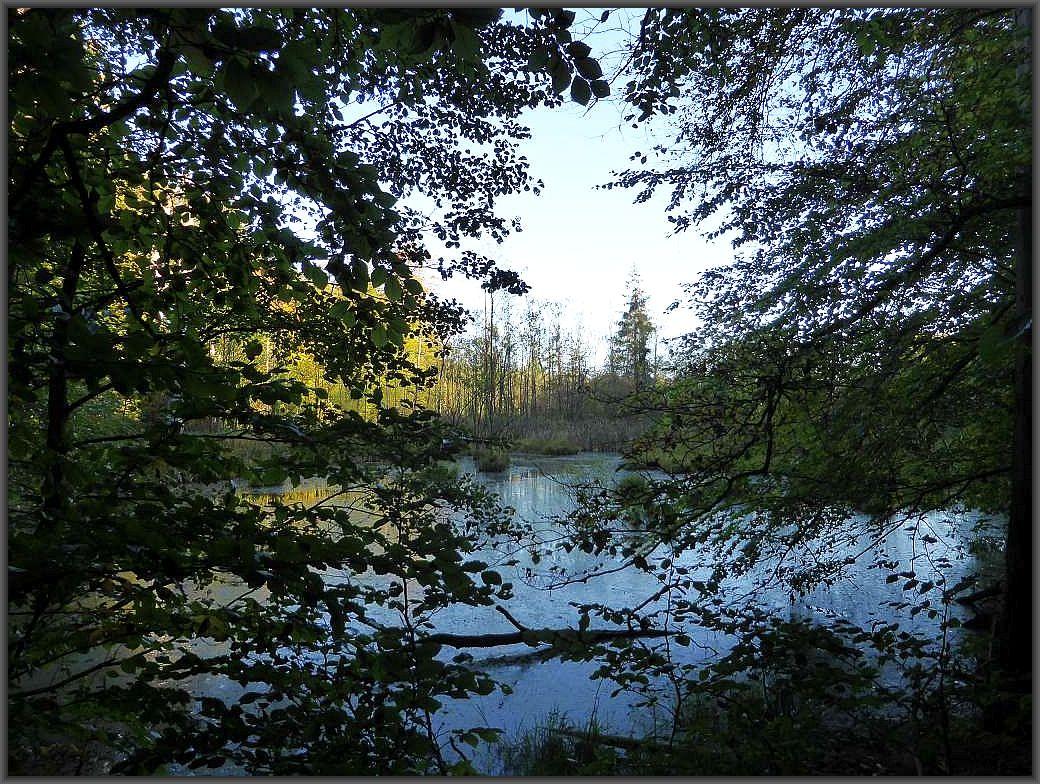 Am Rande eines der ältesten Naturschutzgebiete Deutschlands, dem Schwarzen See im Schlemminer Staatsforst führte heute ein individuelle Pilzwanderung entlang.