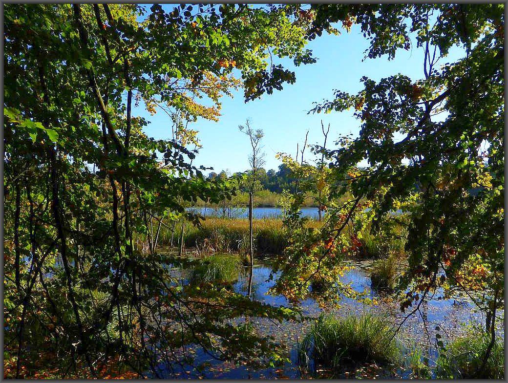 Warum eigentlich Schwarzer See? Bei tiefblauem Himmel und strahlener Mittagssonne schimmert auch das Wasser tiefblau. Ein traumhaft schöner Herbsttag!