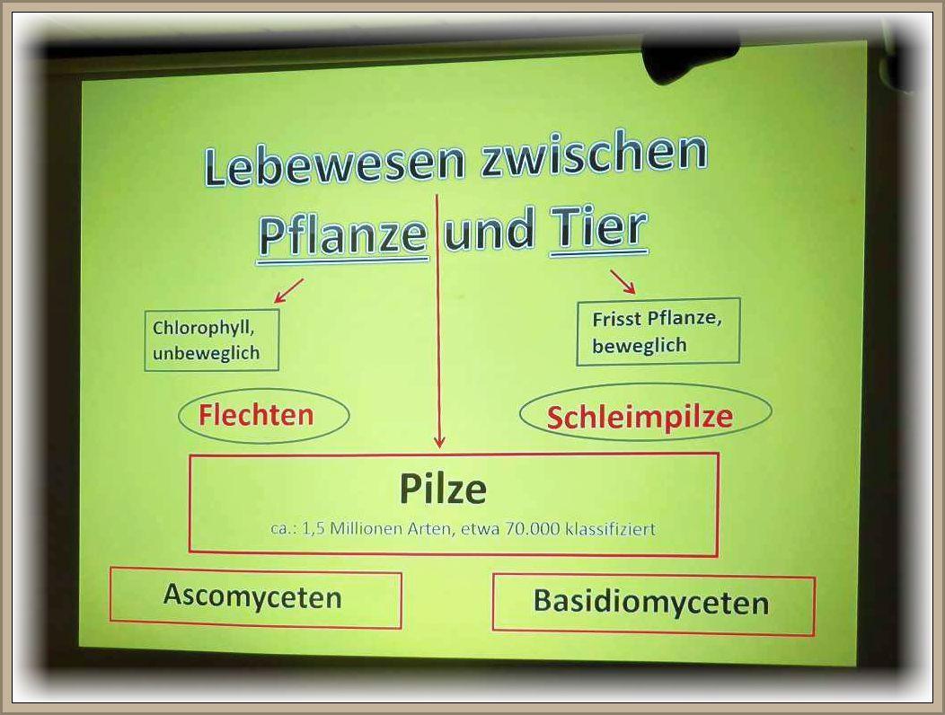 Eine schöne Grafik zur Erläuterung des dritten Naturreichs, der Pilze. Es sind keine Pflanzen, keine Tiere, ebend Pilze mit Übergängen in beide Richtungen.