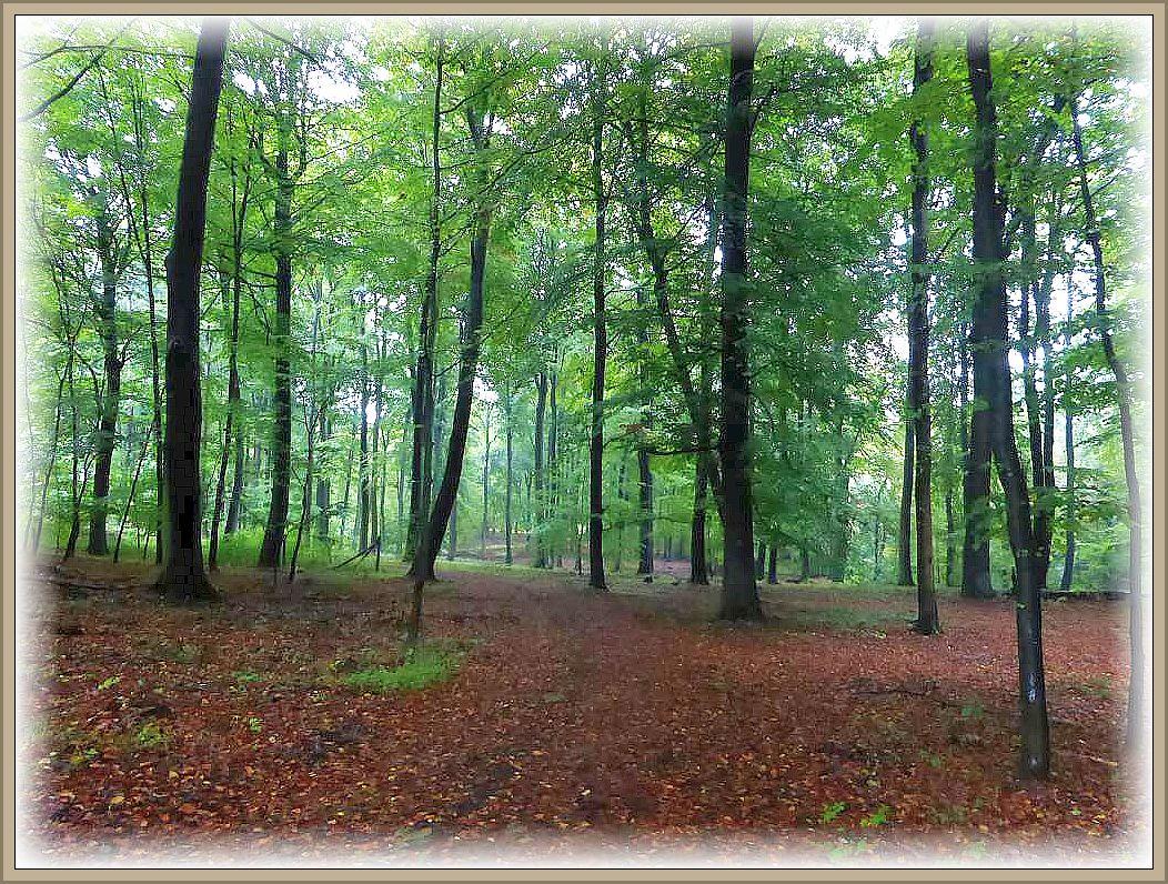 Das Heidenholz ist erreicht. Die grünen Blätter erinnern immer noch eher an den Sommer als an den goldenen Oktober.nicht