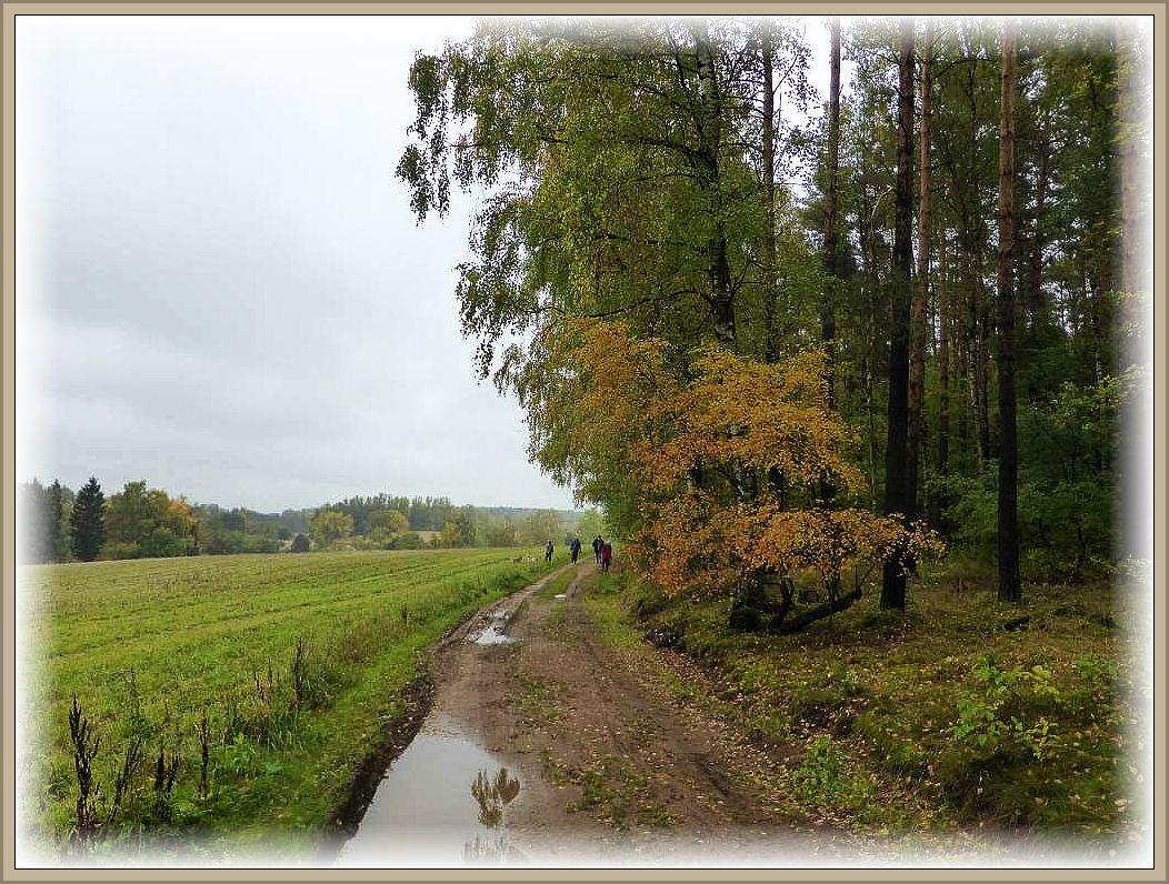 Der Wald legt hier zunehmend sein goldenes Oktoberkleid an, das aber bei dem trüben Regenwetter nicht so recht zur Geltung kommt.
