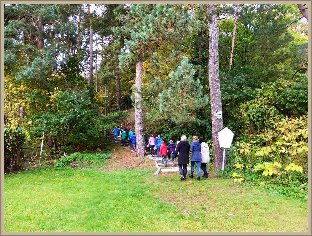 Nach fünf Minuten ist unser Ziel erreicht und schnell noch die Treppen hinauf zum Wald am Burgwall.