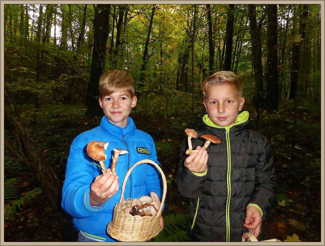 Hallimasch auch in den Händen sdieser jungen Pilzsammler. Schnell füllen sich die Körbe!