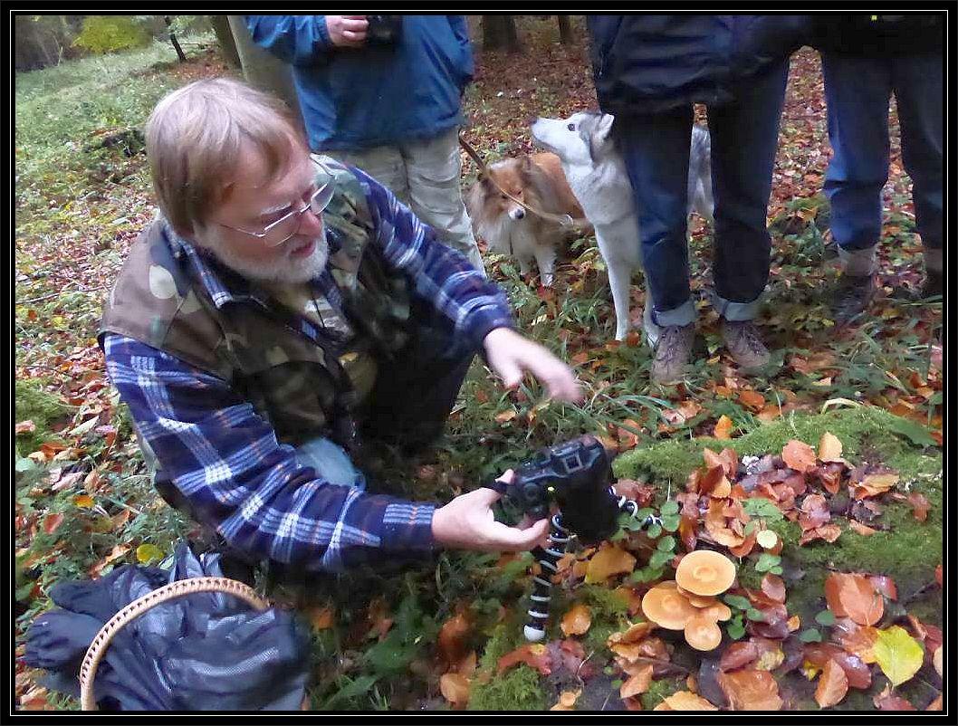 Reiseleiter Christopher Engelhardt fotografiert ein kleines Büschel Stockschwämmchen.