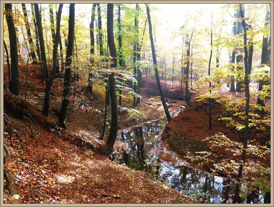 Die Beke schlängelt sich bei mildem Sonnenlicht durch das naturnahe Tal.