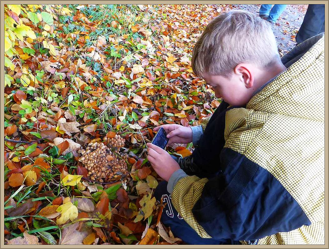 Wir hatten das Exkursionsgebiet kaum erreicht, so begrüßten uns einige dichte Büschel von kleinen Blätterpilzen am Wegesrand. Jonas beim Fotografieren.