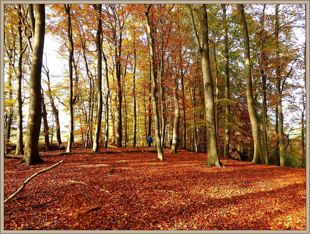An dieser Stelle erweitert sich das schmale Bachtal zu einem größeren, kompakten Waldgebiet, dem Grünen Rad, das heute allerdings altgolden im Sonnenlicht ertrahlte.