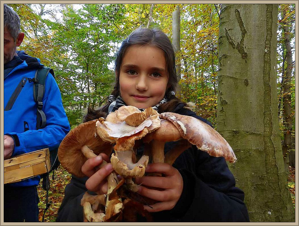 Das hat sich aber gelohnt. Zwar große, aber noch verwertbare Hallimasch, die unsere jüngste Pilzfreundin heute in den Händen hält. Schön ist auf den Hüten auch der weiße Sporenstaub des Hallimasch zu sehen.