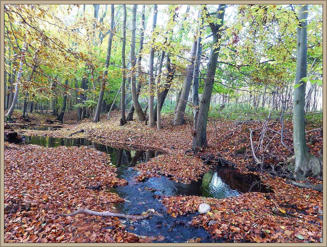 Wo das Tal abflacht und die Bekesich etwas breiter machen kann, ist zu dieser Jahreszeit Vorsicht angezeigt. Das frisch gefallene Laub verdeckt Feuchstellen und man kann leicht unverhofft nasse Füße bekommen.