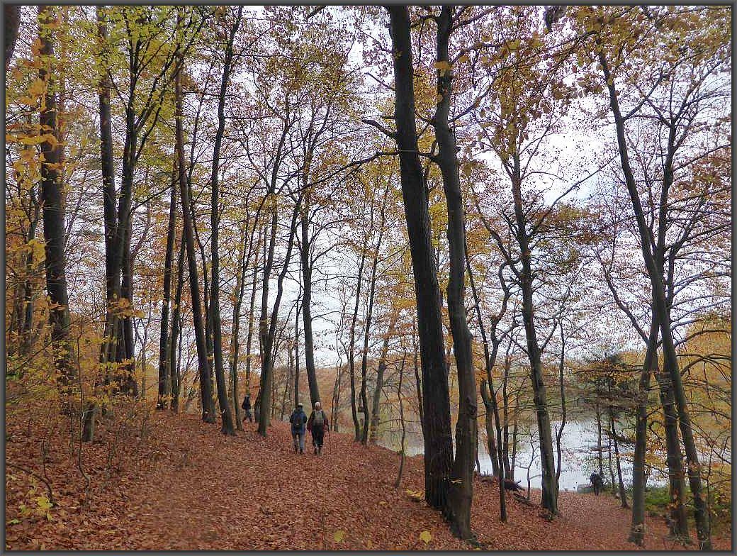 Weiter geht es an den bewaldeten Hängen des Hohlsees.