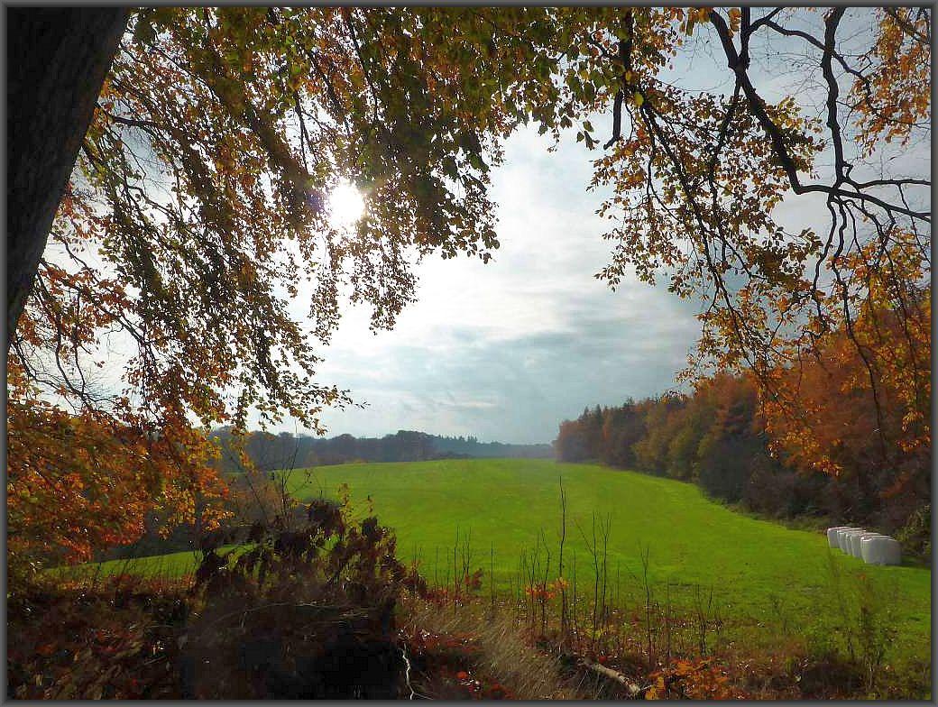 Blick oberhalb des Deichelsees auf eine hügelige Wand - und Wiesenlandschaft. Hier führt uns unser Weg weiter über die Wiese..
