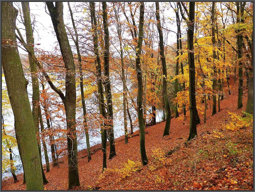 Noch einmal ein stimmungsvoller, herbstlicher Blick den Hangterrassen des Buchenwaldes hinunter zum Deichelsee.