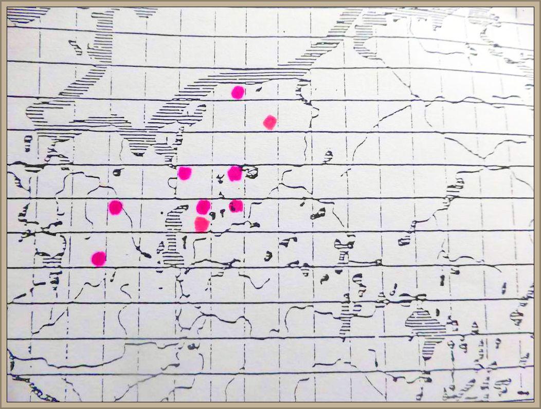 Ceraceomyces serpens (Tode: Fr.) Ginns - Faltiggewundener Wachsrindenpilz