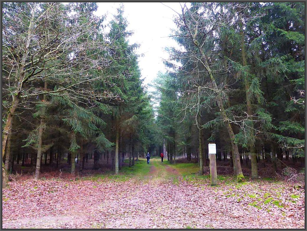 Weiter geht es durch den Nadelwald in Richtung Ventschow. Das Ziel ist nicht mehr weit.