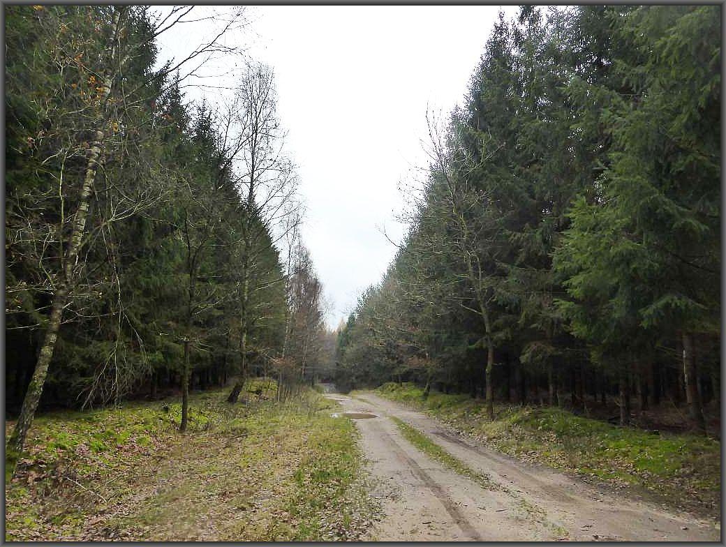 Nach der teils offenen, nur locker bewaldeten Döpe - Landschaft erreichten wir die geschlossenen Wälder zwischen Ventschow und Flessenow. Ein klassisches Pilzsucherevier mit vielen Fichten und Kiefernbeständen auf sandigen Böden.