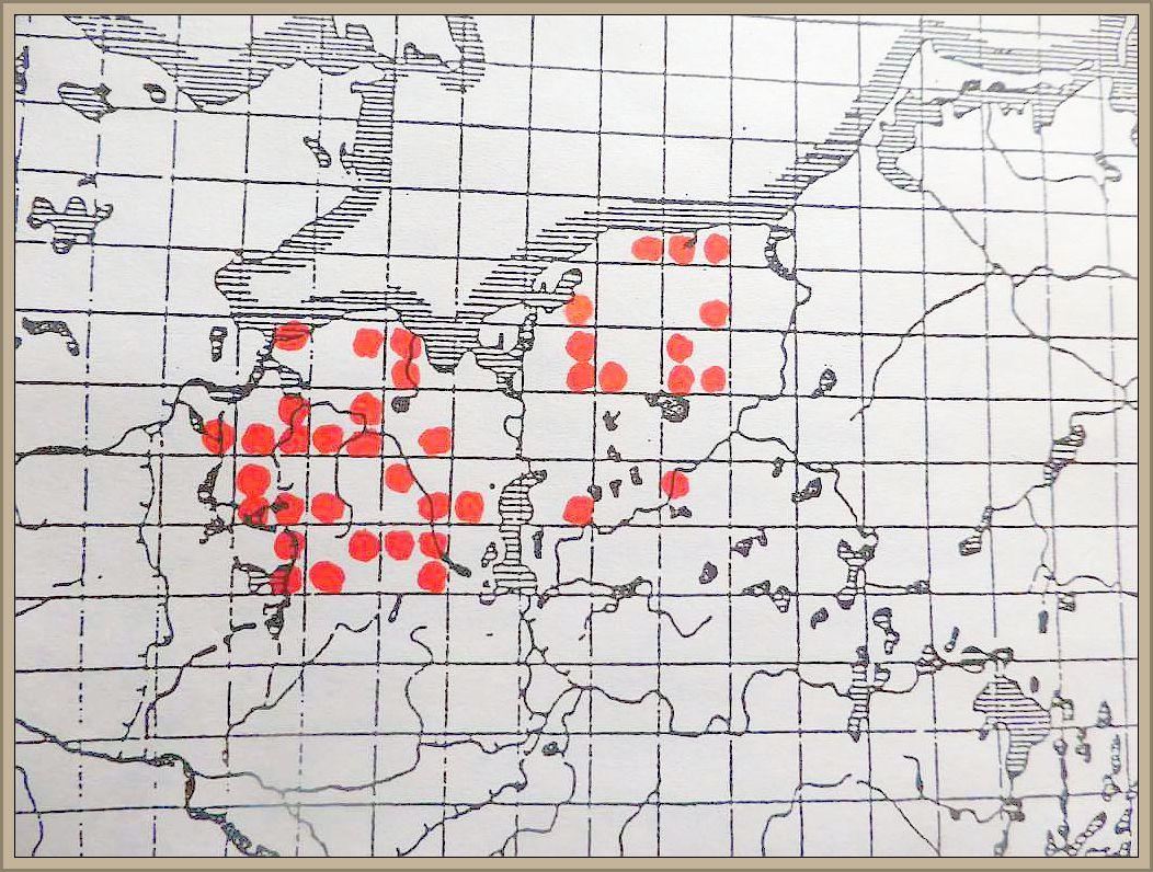 Ceriporia reticulata (Hoffm.:Fr.) Dom. - Netzartiger Wachsporling