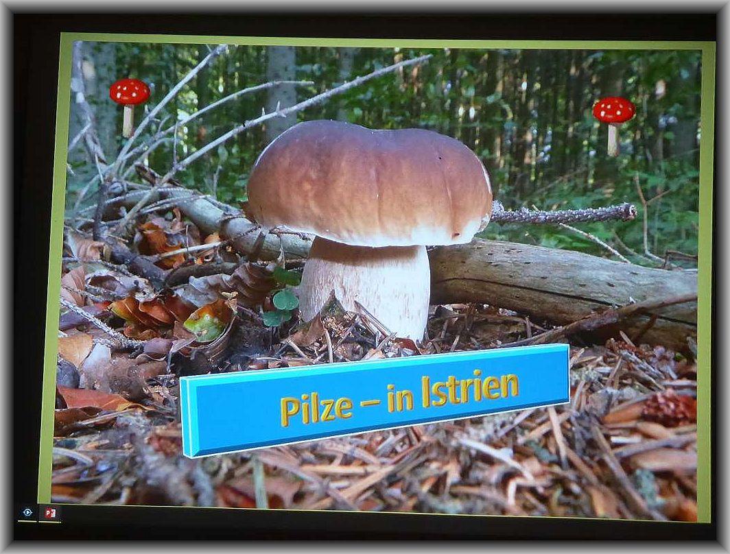 Genauer genommen Pilze aus Istrien.