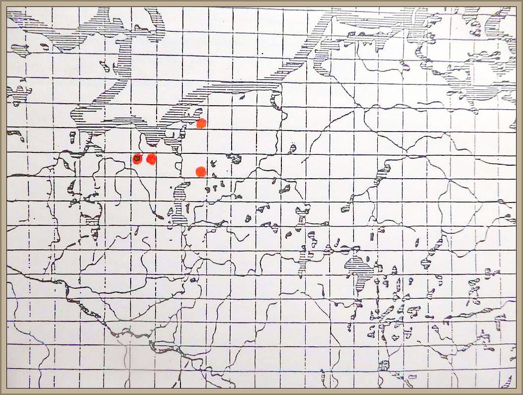 Clitocybe vermicularis (Fr.) Quel. - Lärchentrichterling
