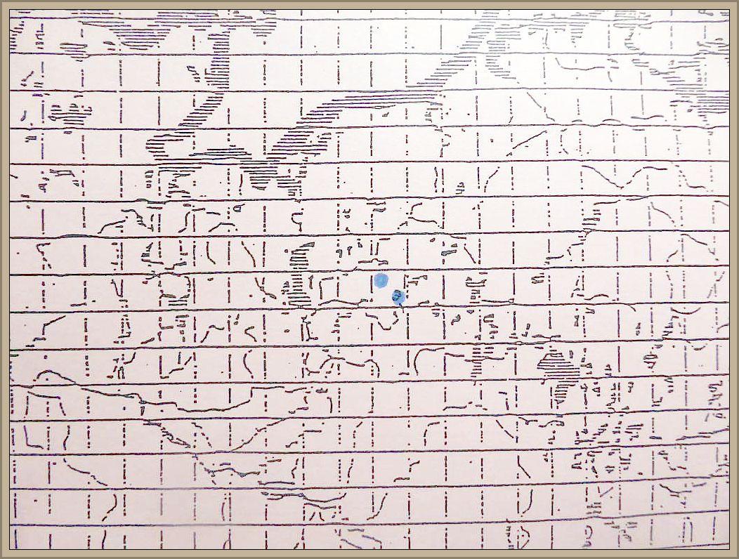 Collybia cirrhata (Pers.) Kumm. - Seidiger Sklerotienrübling