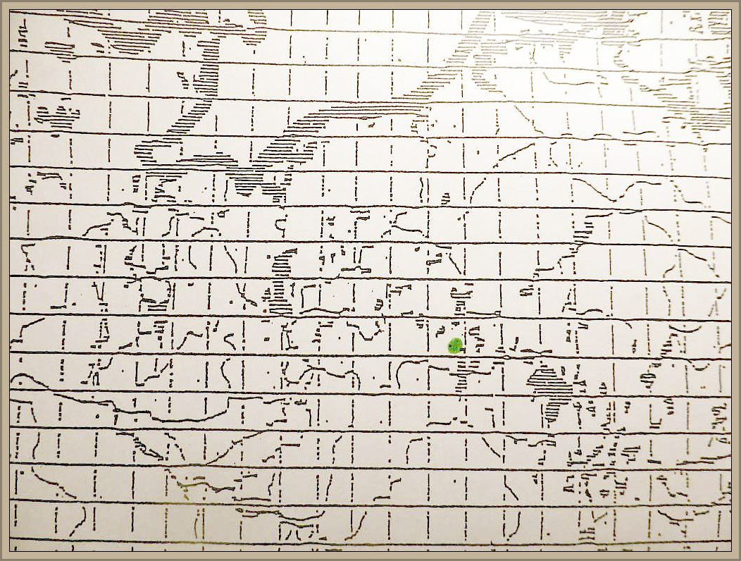 Cordyceps capitata (Holmsk. & Fr.) Link. - Gelbstiele Hirschtrüffel - Kernkeule